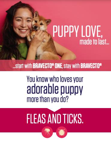 Pet Parent Brochure